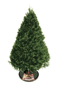 Sheared Douglas Fir Christmas Tree Omaha