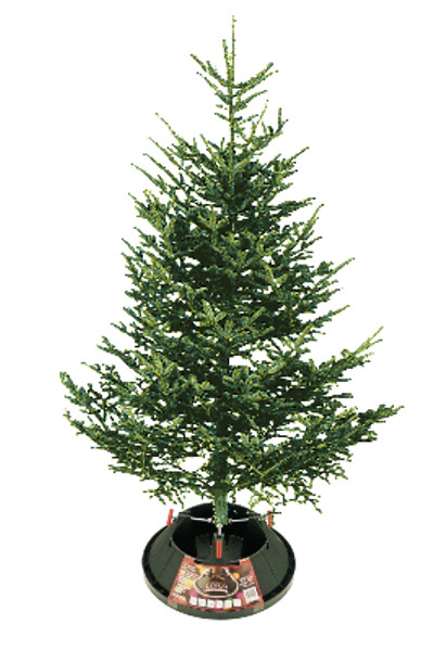 Christmas Trees Archives - Indian Creek Nursery and Garden ...